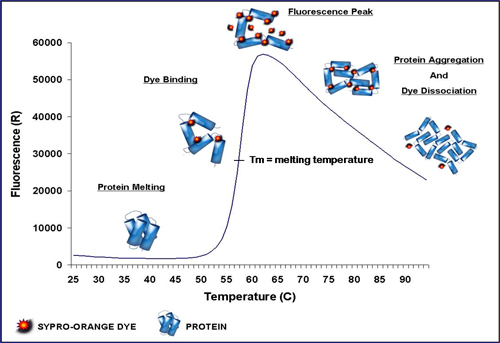 an ice calorimeter determination of reaction Enthalpy of neutralization objective in this experiment you will determine the molar enthalpy of neutralization of an acid introduction the study of energy and its transformations is known as thermodynamics thermochemistry is the branch of thermodynamics that relates to chemical reactions and energy changes involving heat.