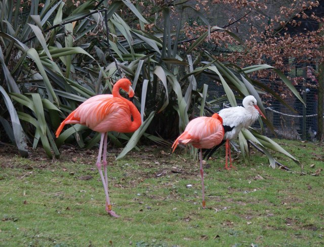 File Two Pink Flamingos At Lotherton Hall Bird Garden