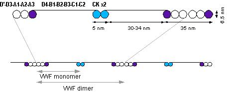 Von willebrand factor 8 deficiency