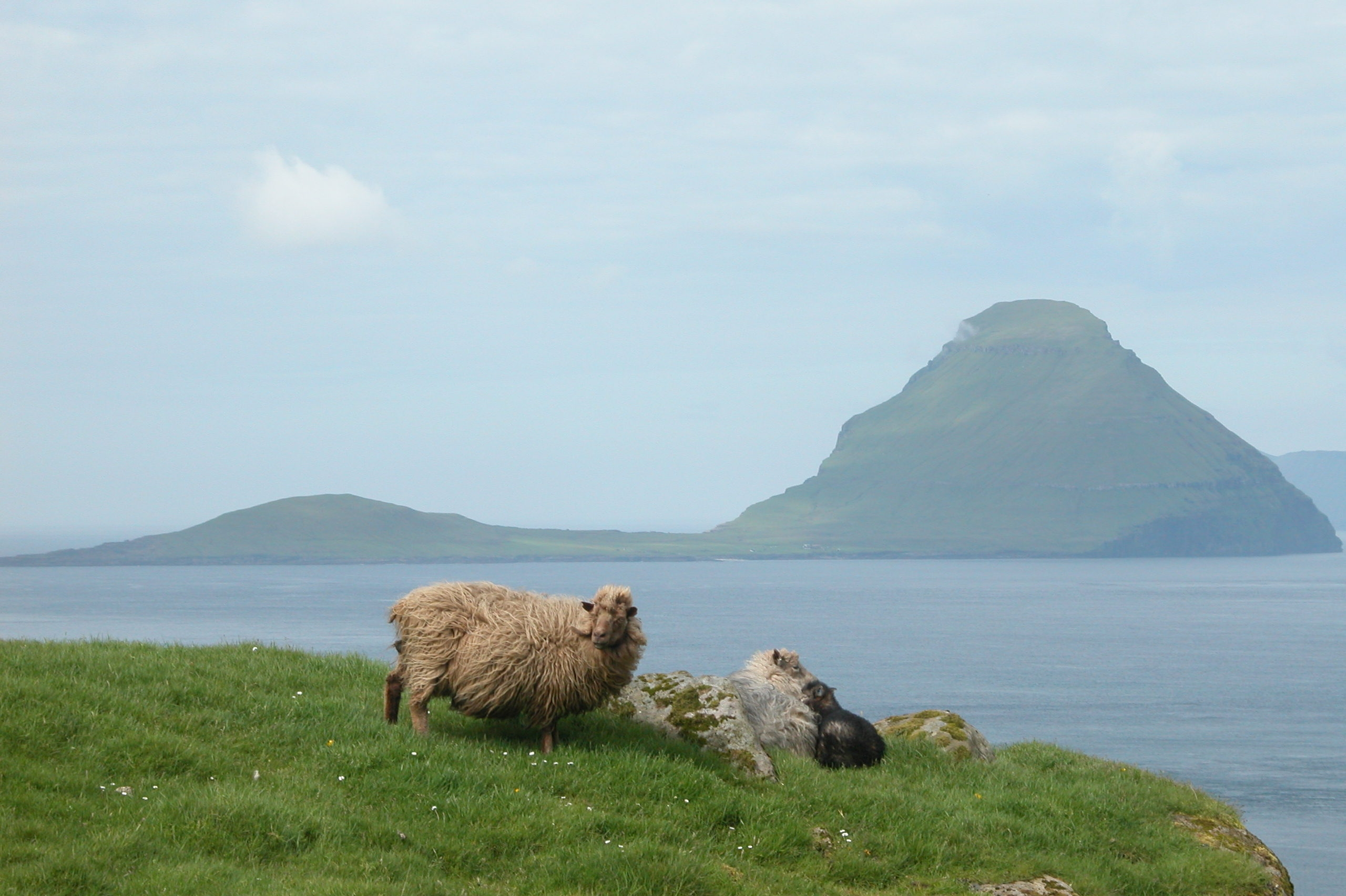 Faroe dating site