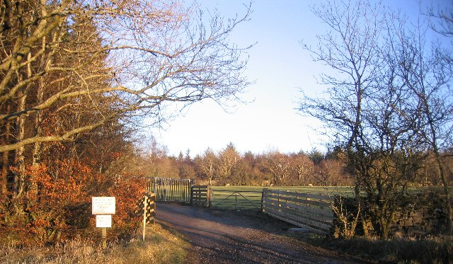 An Entrance to Greystoke Woods. - geograph.org.uk - 114547