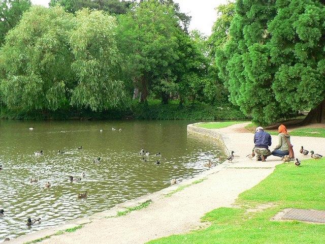 Bedford Park Lake - geograph.org.uk - 1395945