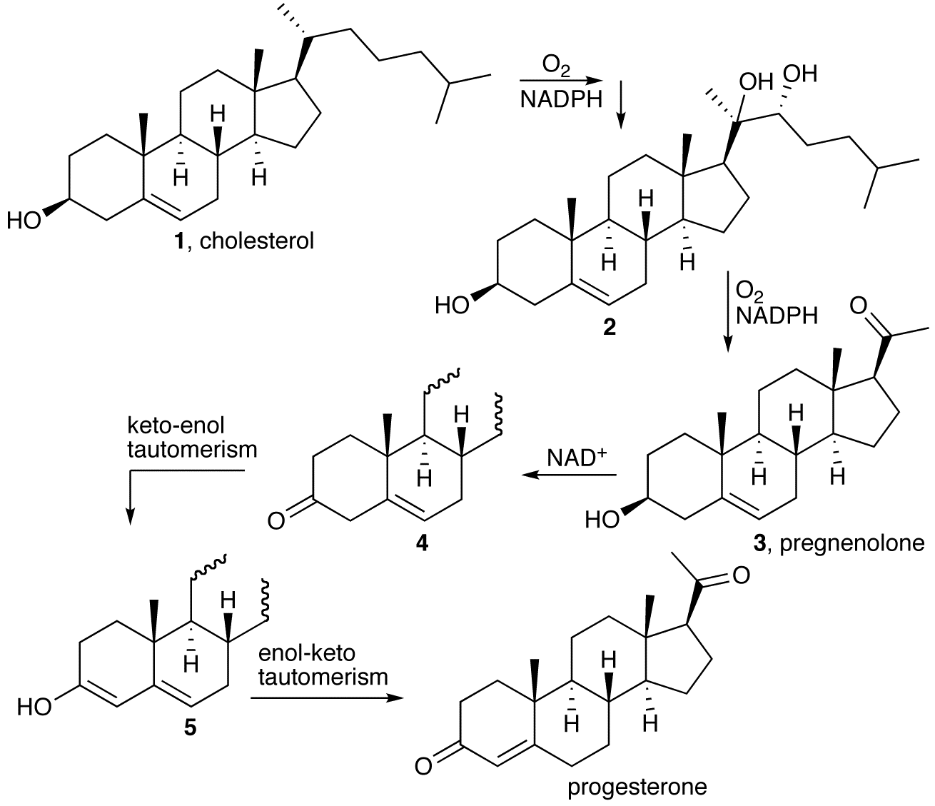 biosynthesis of cholesterol and steroids