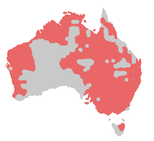 Inaccurate range of Little Corella