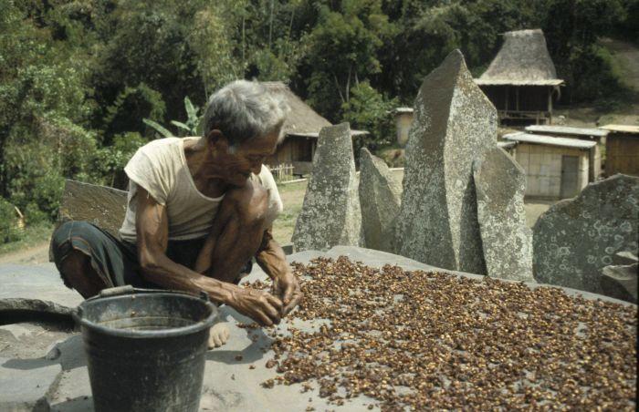 Coffee Culture In Indonesia