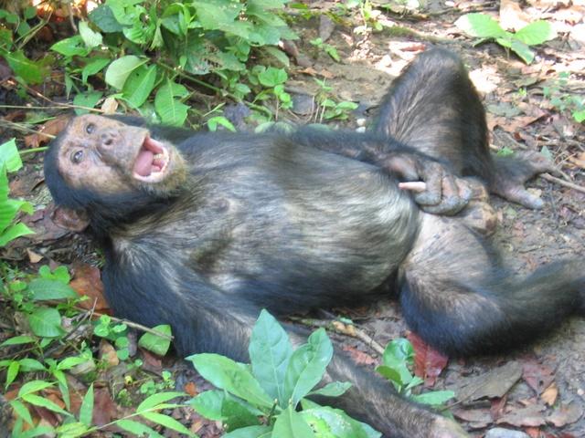 File:Case Lorance Monkey.jpg