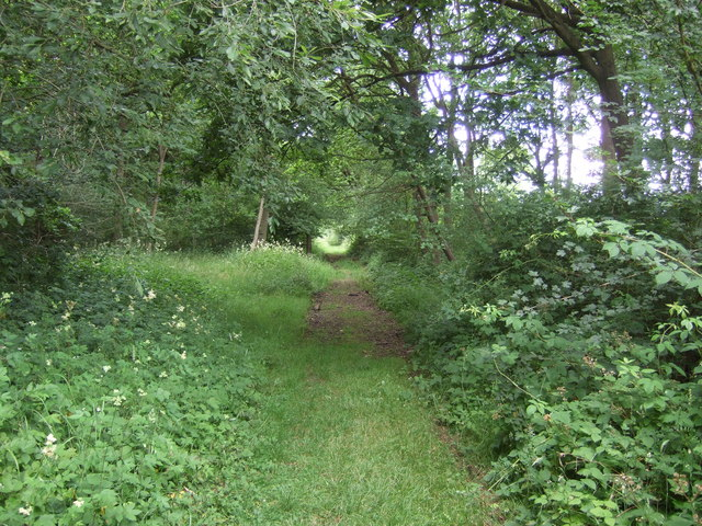 Castor Hanglands - geograph.org.uk - 1387148