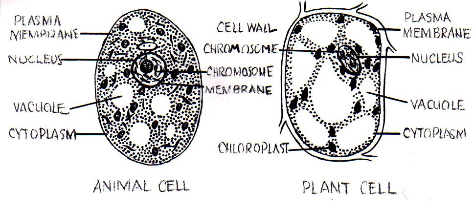 File Cell  Psf  Jpg