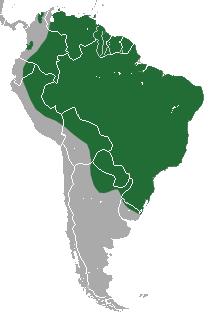 Aire de répartition (en vert) du tamandua à quatre doigts en Amérique du Sud