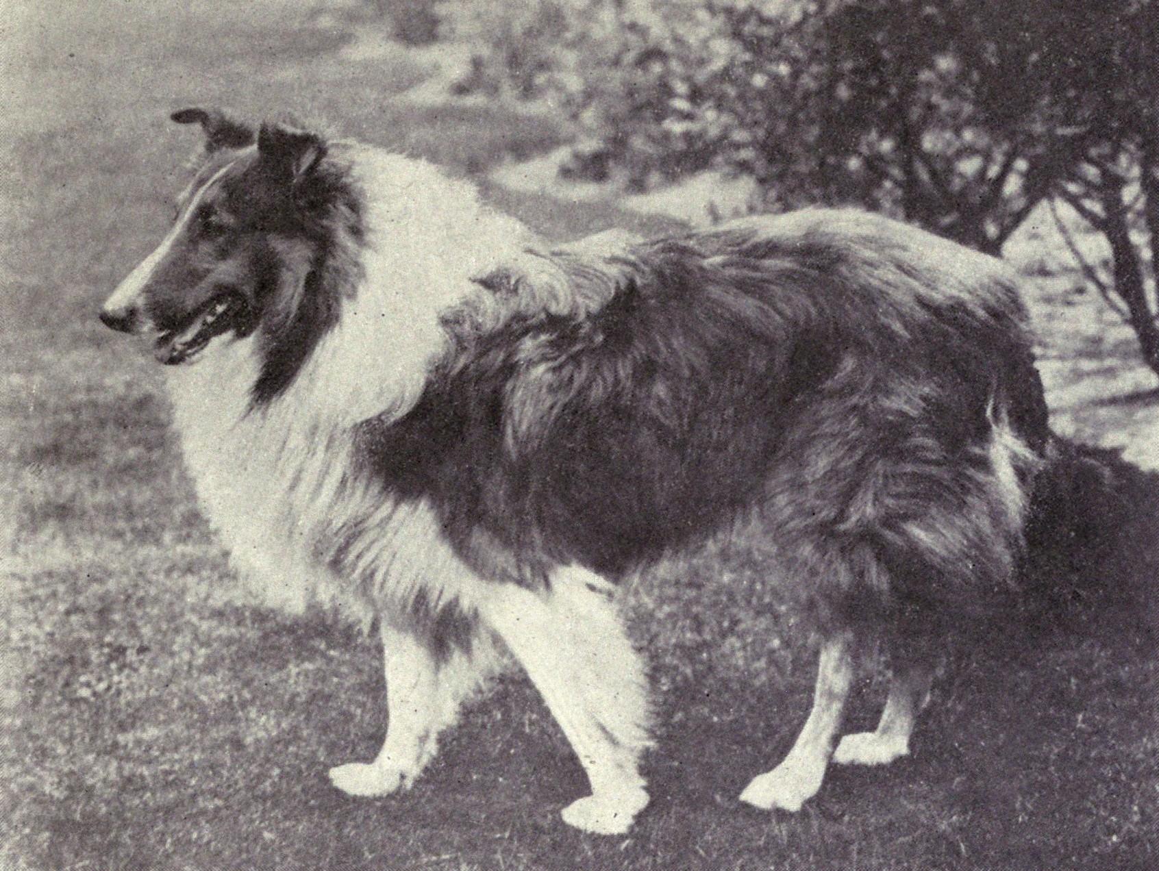 Retired Breeding Dogs