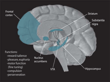 SN/VTA areas of the human brain