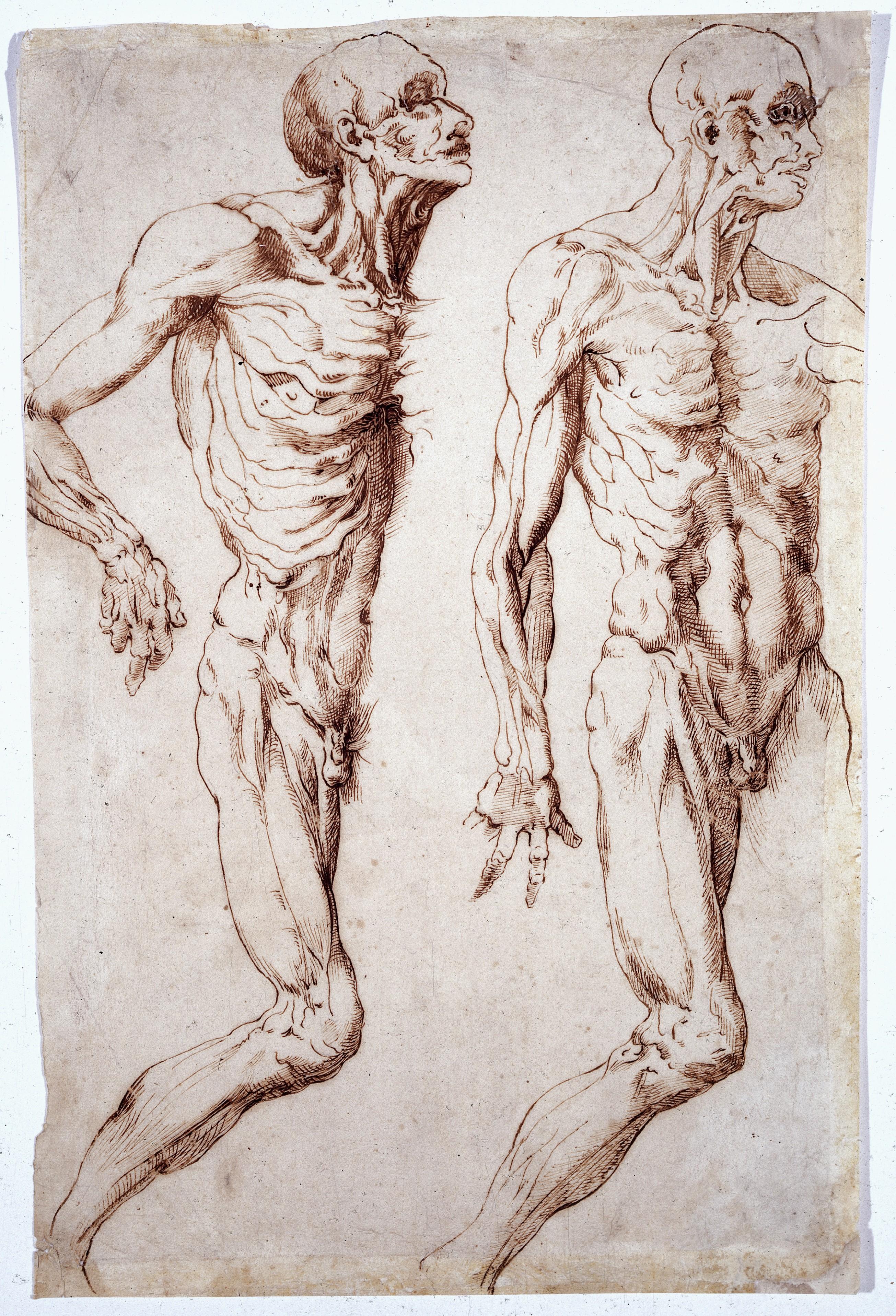 Gemütlich Wellcome Museum Für Anatomie Und Pathologie Galerie ...