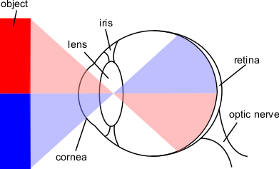 Optical layout of the eye -- Wikipedia