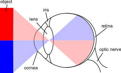 Fileeye diagramg wikimedia commons eye diagramg ccuart Choice Image