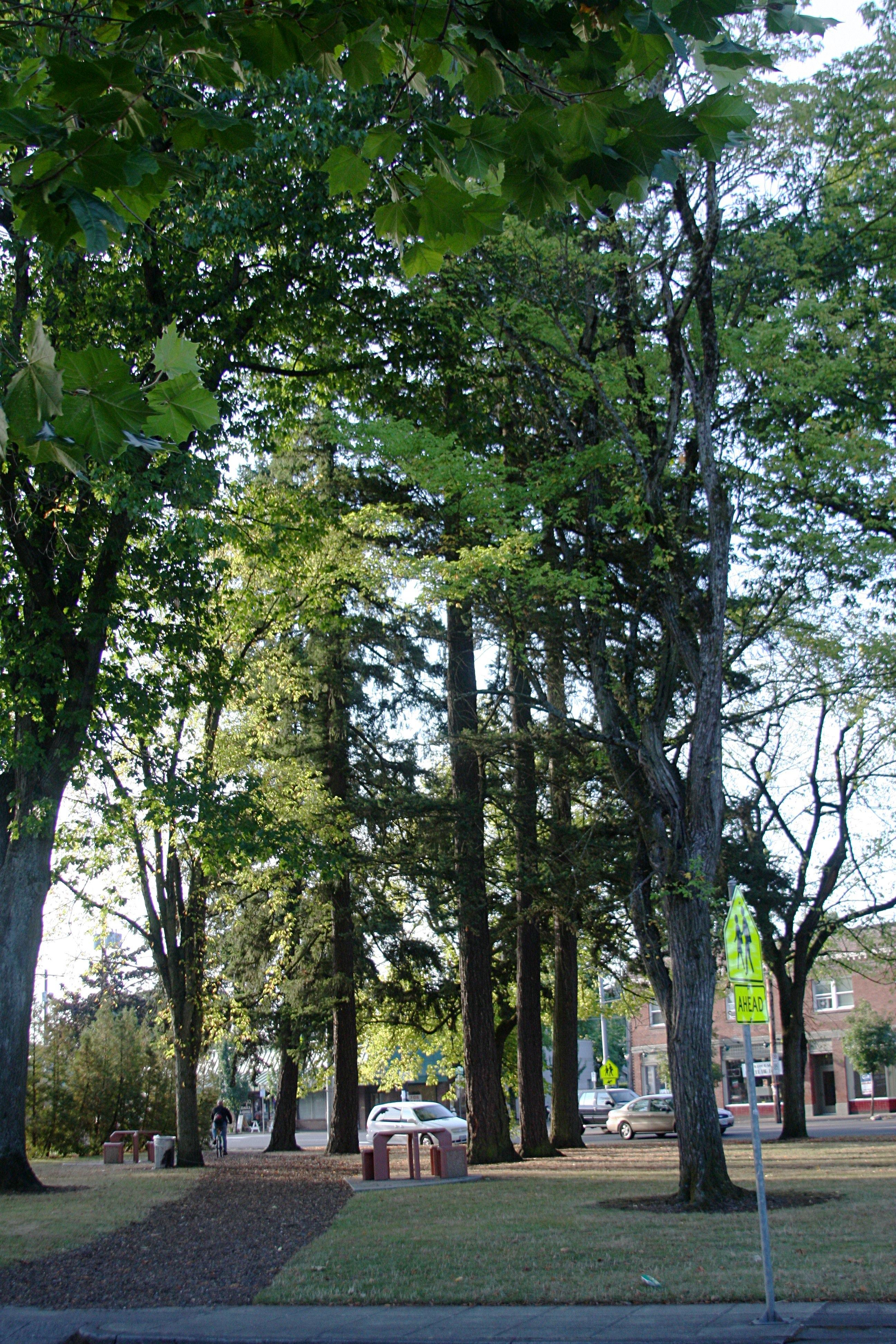 File laurelwood park portland oregon jpg wikipedia for Laurel wood