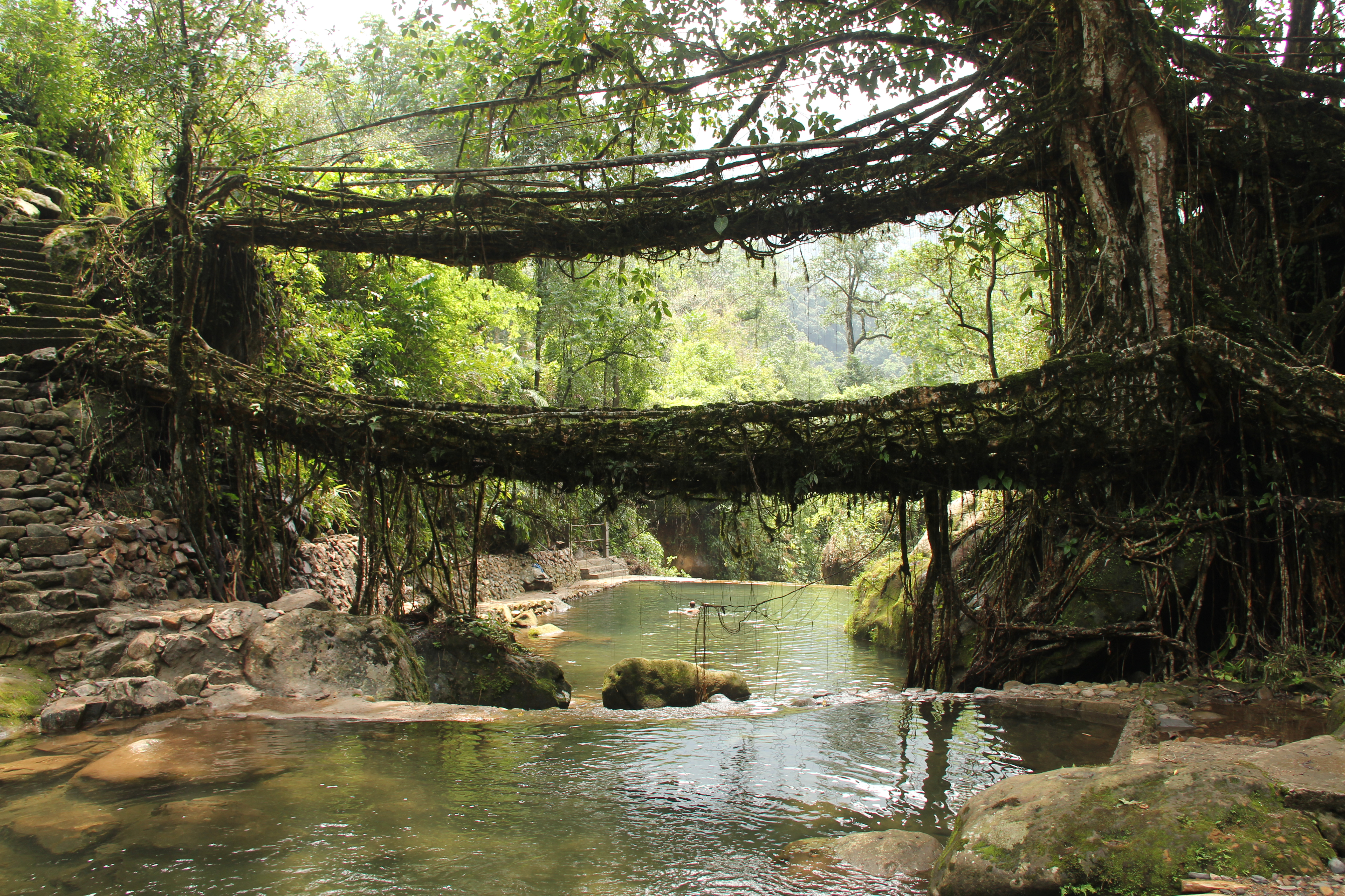 Arhitektura koja spaja ljude - Mostovi - Page 2 Living_root_bridges,_Nongriat_village,_Meghalaya2