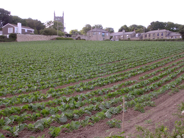 Ludgvan field penwith cornwall