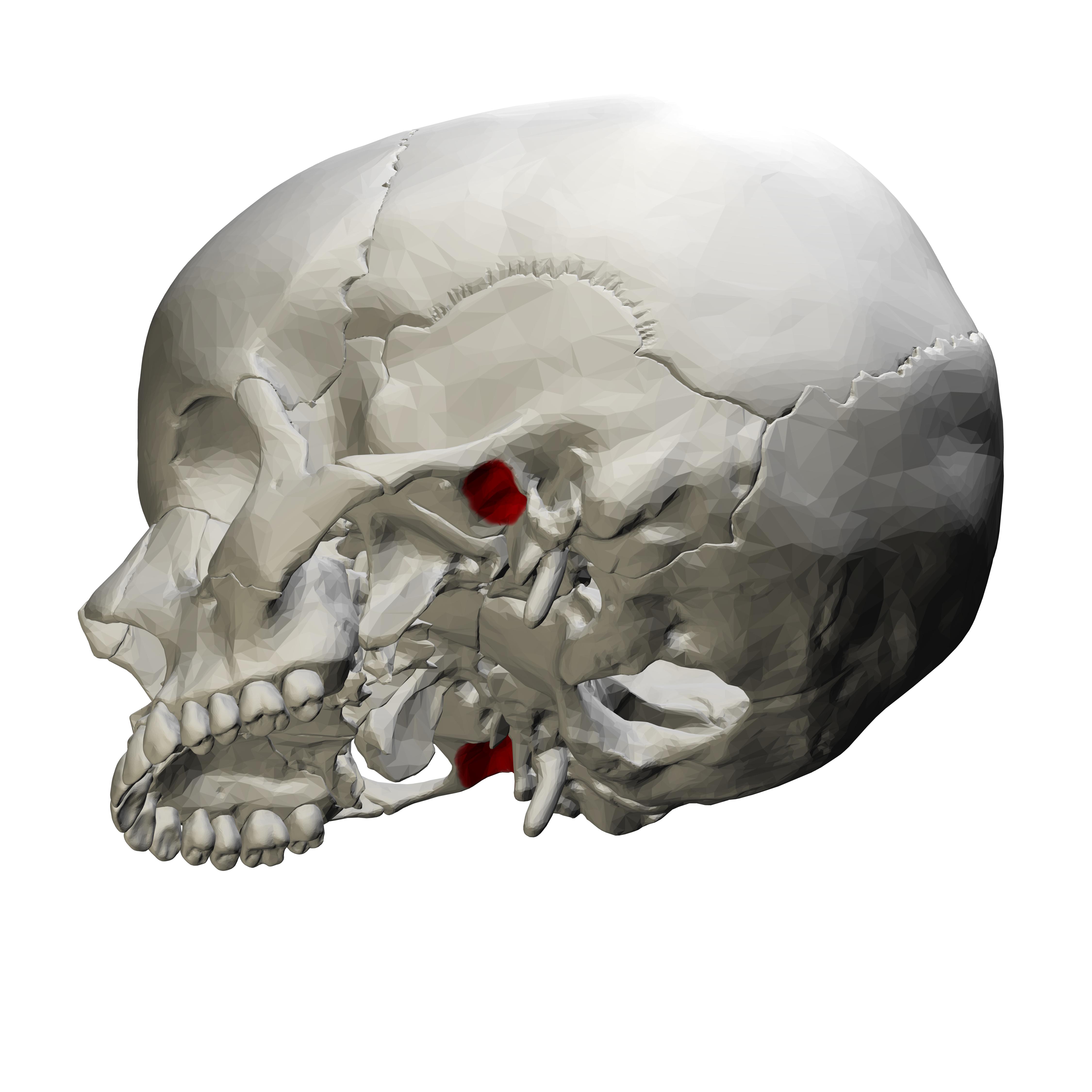 balsam pentru coloana vertebrală și articulații durere în zona articulației degetului mare