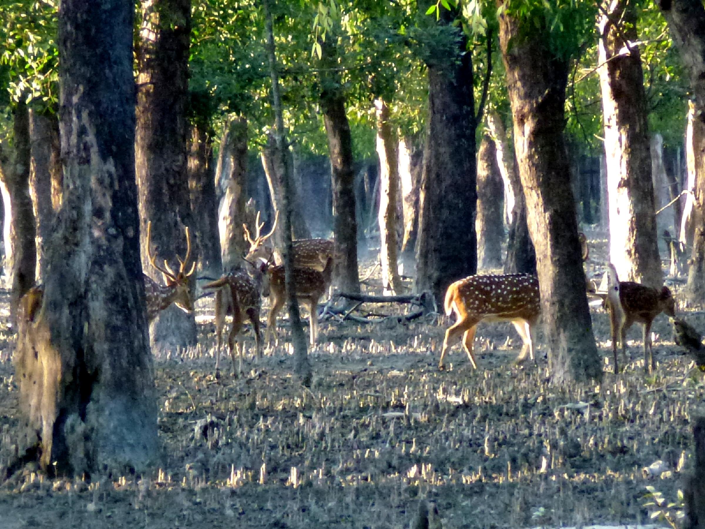 Sundarban | List of National Park in India