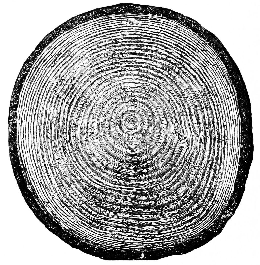 photo cut trunk and stock illustration of saw tree vector rings textures