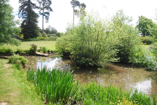 Pond, Dunorlan Park-geograph-3719931