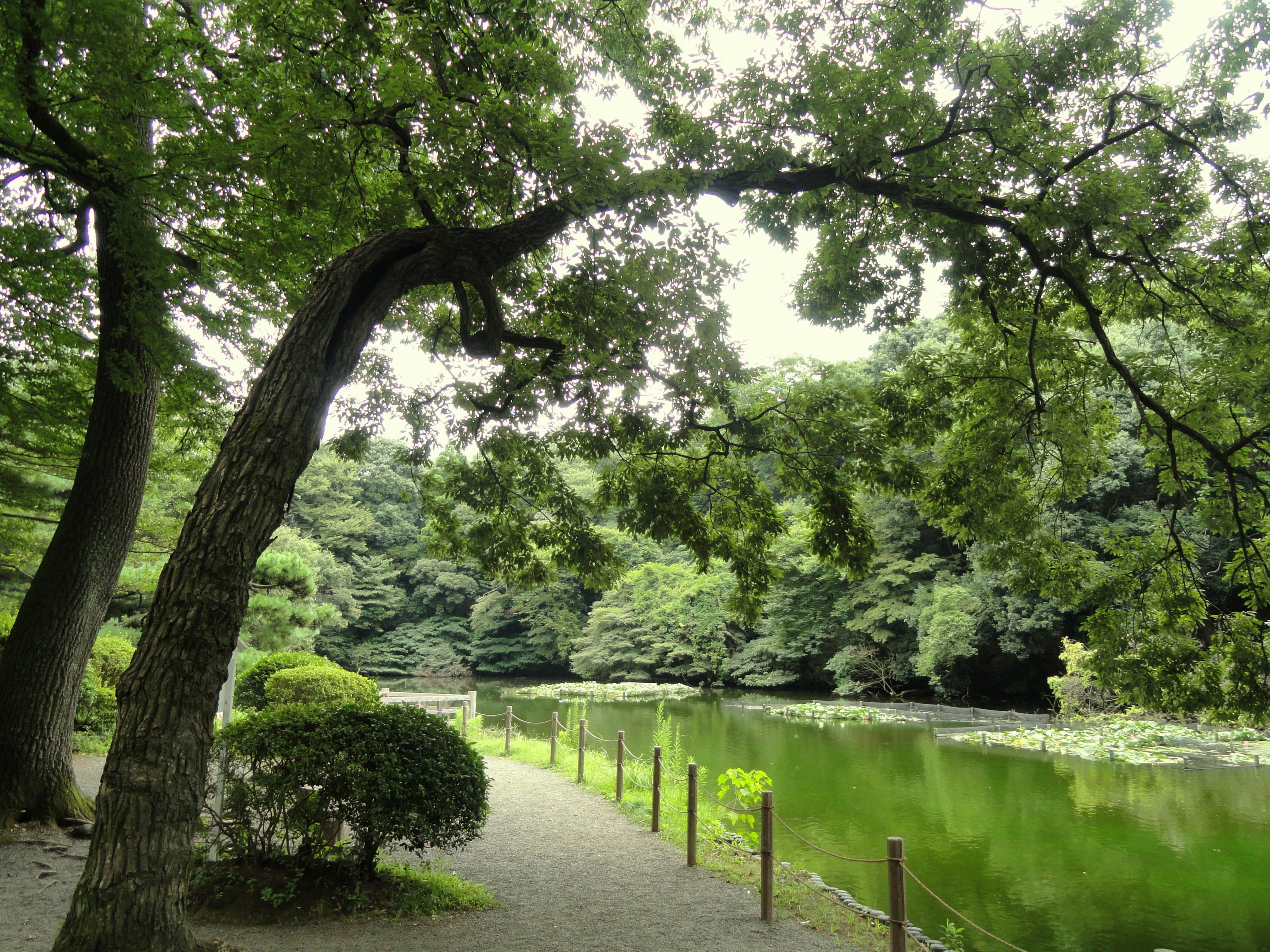 File:Pond   Meiji Shrine Inner Garden   DSC04923.JPG