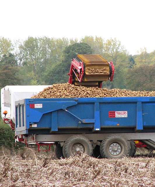 File Potato Harvest The Trailer Is Almost Full Geograph Org Uk