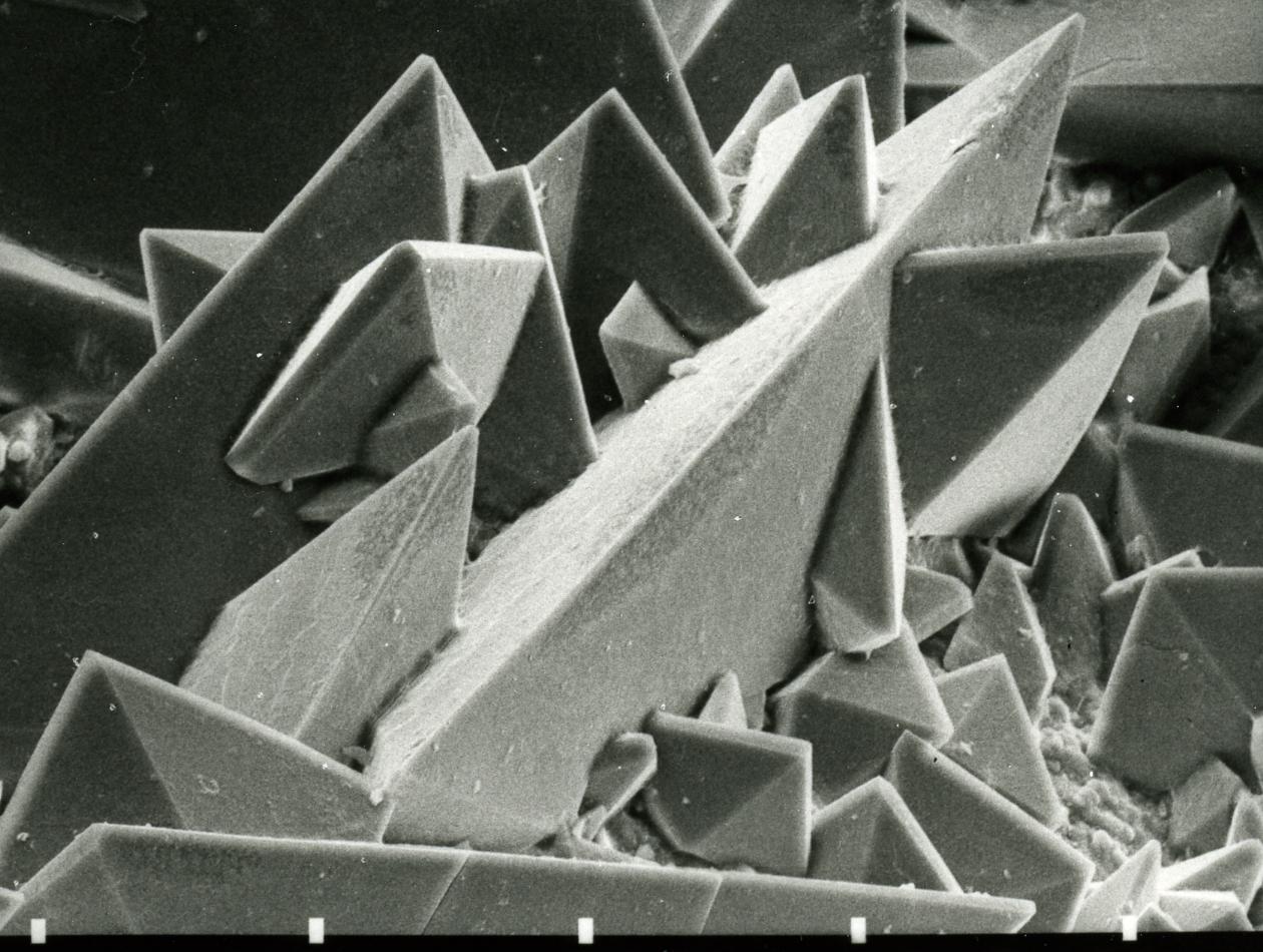 file:rasterelektronenmikroskopische abbildung der oberfläche eines