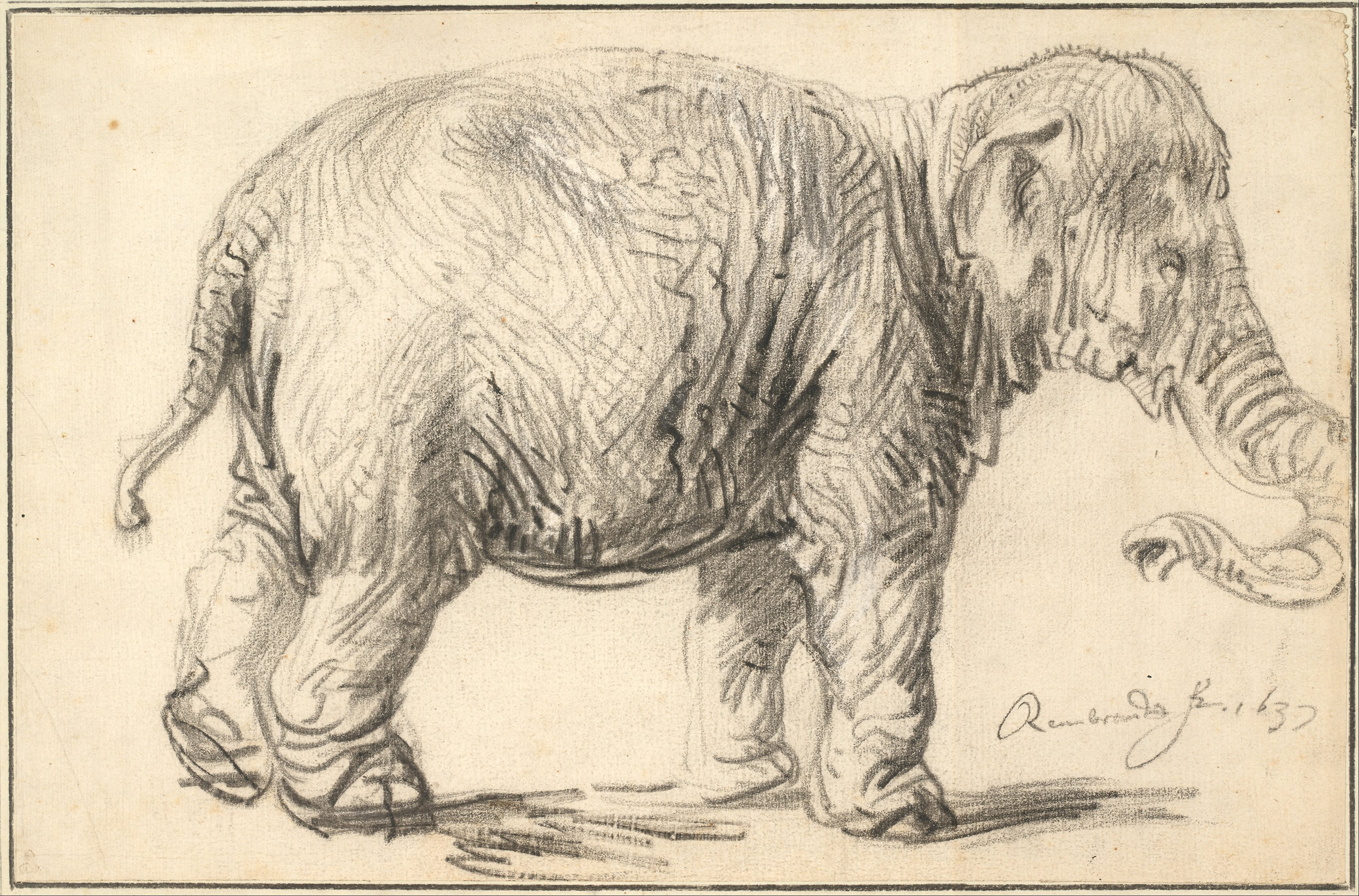 File:Rembrandt Harmenszoon van Rijn - An Elephant, 1637 - Google Art  Project.