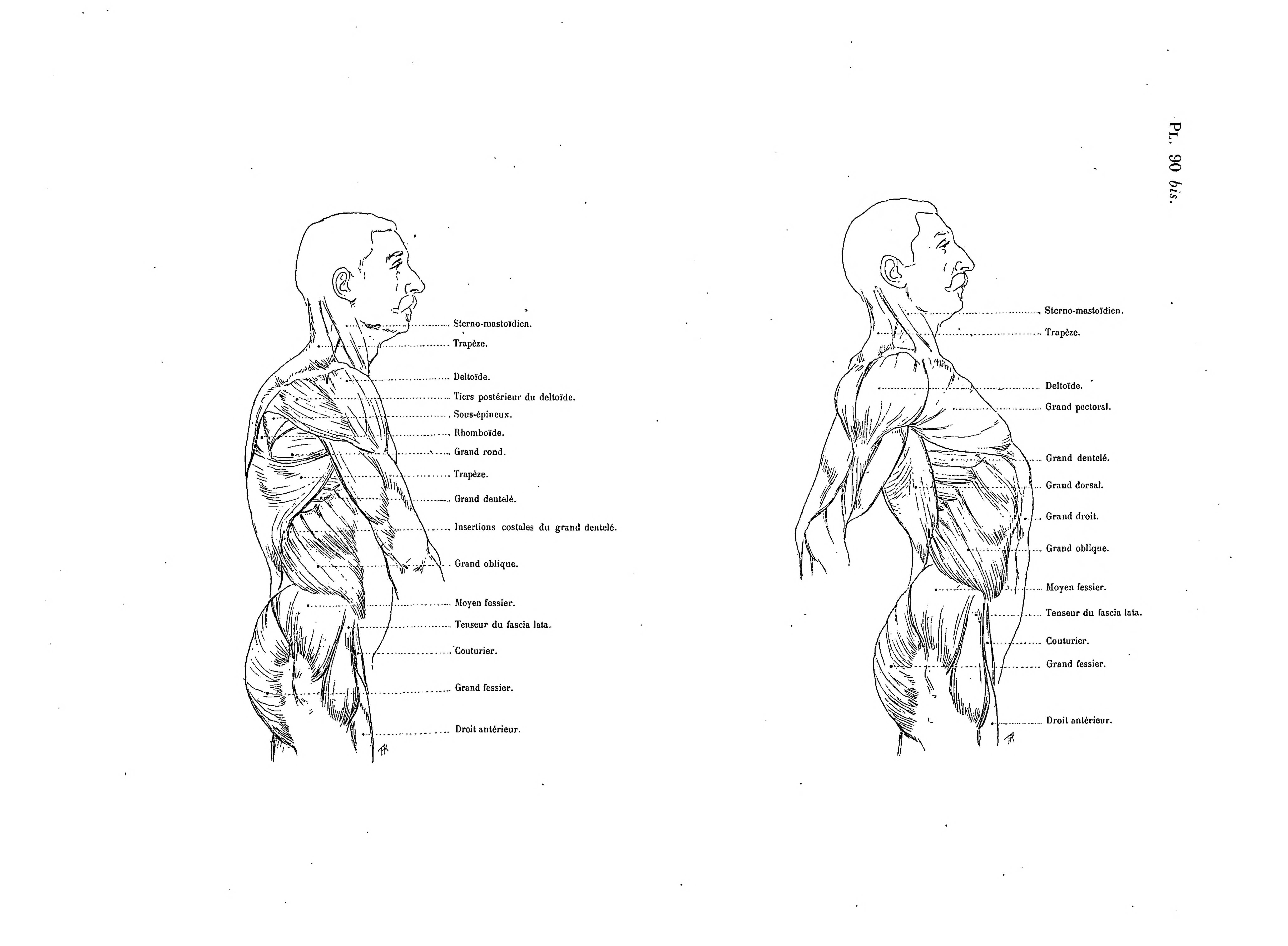 File:Richer - Anatomie artistique, 2 p. 111.png - Wikimedia Commons