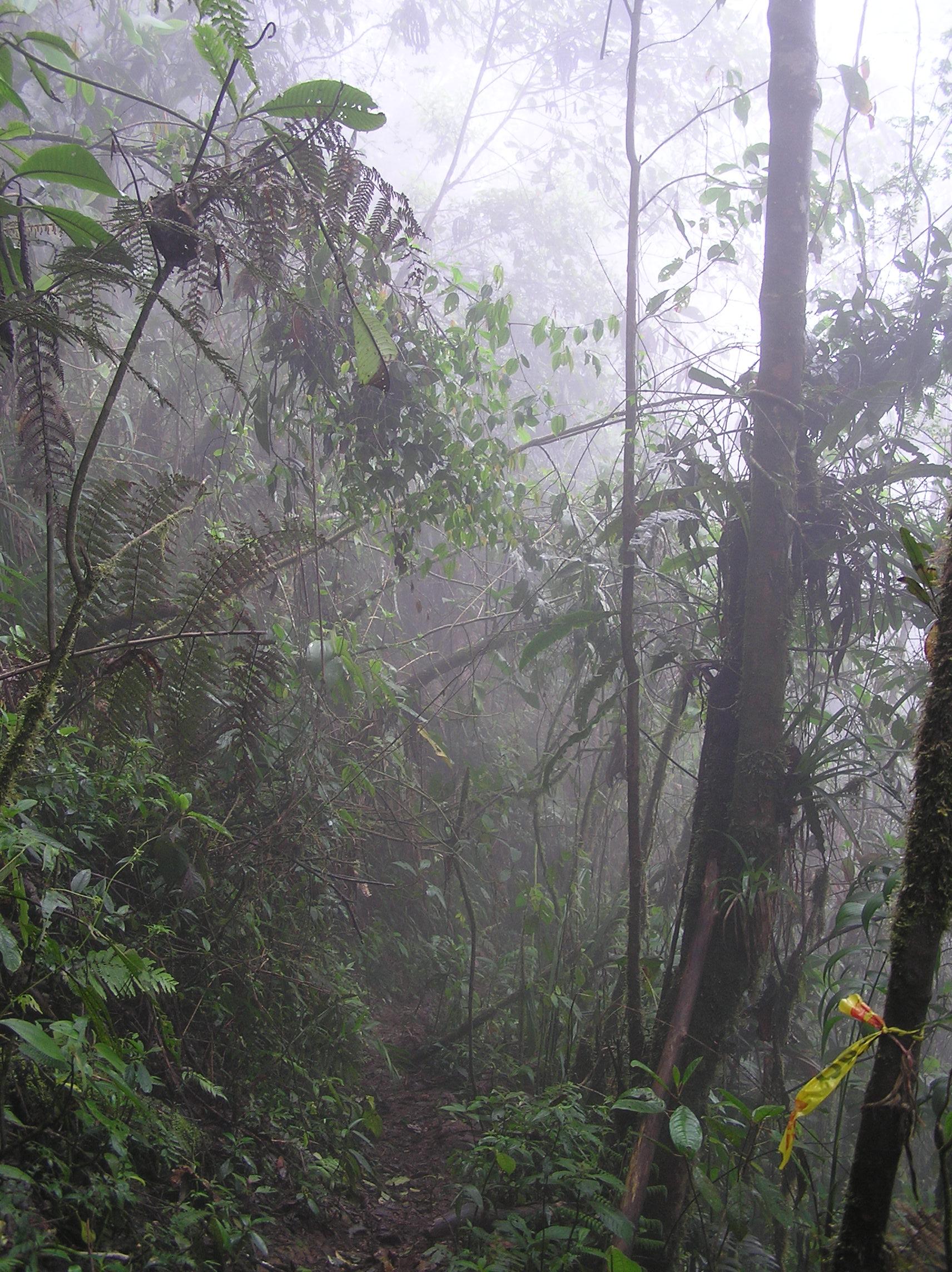 Bosque Tropical Del Pacífico Wikipedia La Enciclopedia Libre