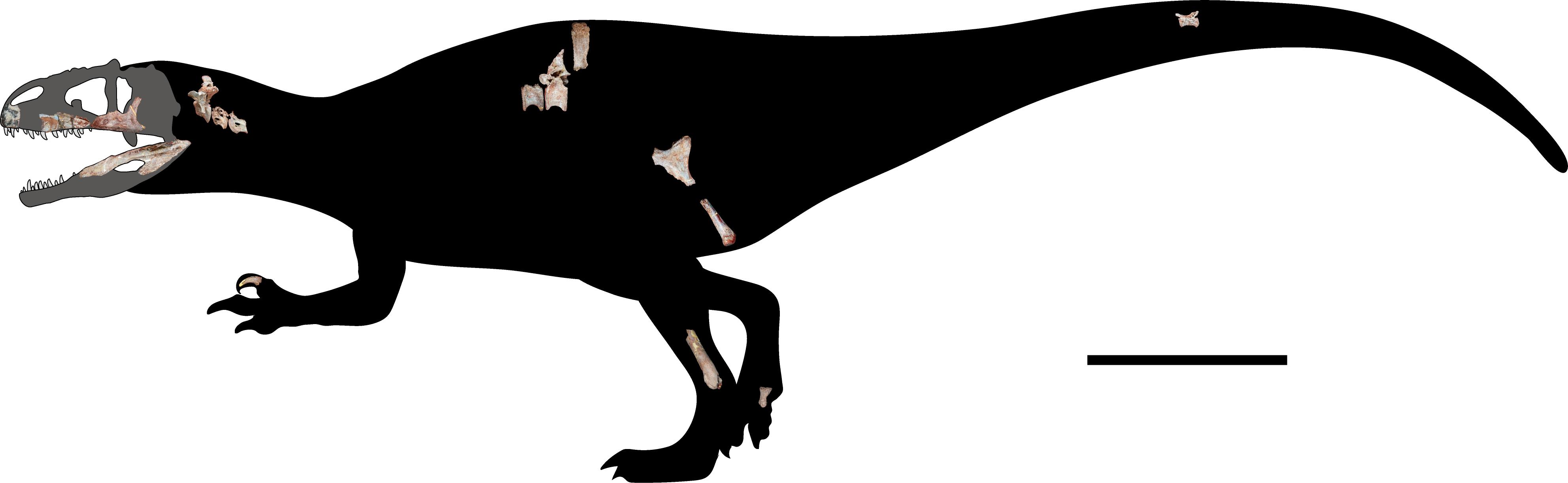 Siamraptor suwati reconstruction