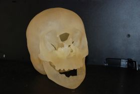 File:Skull wax cast.JPG