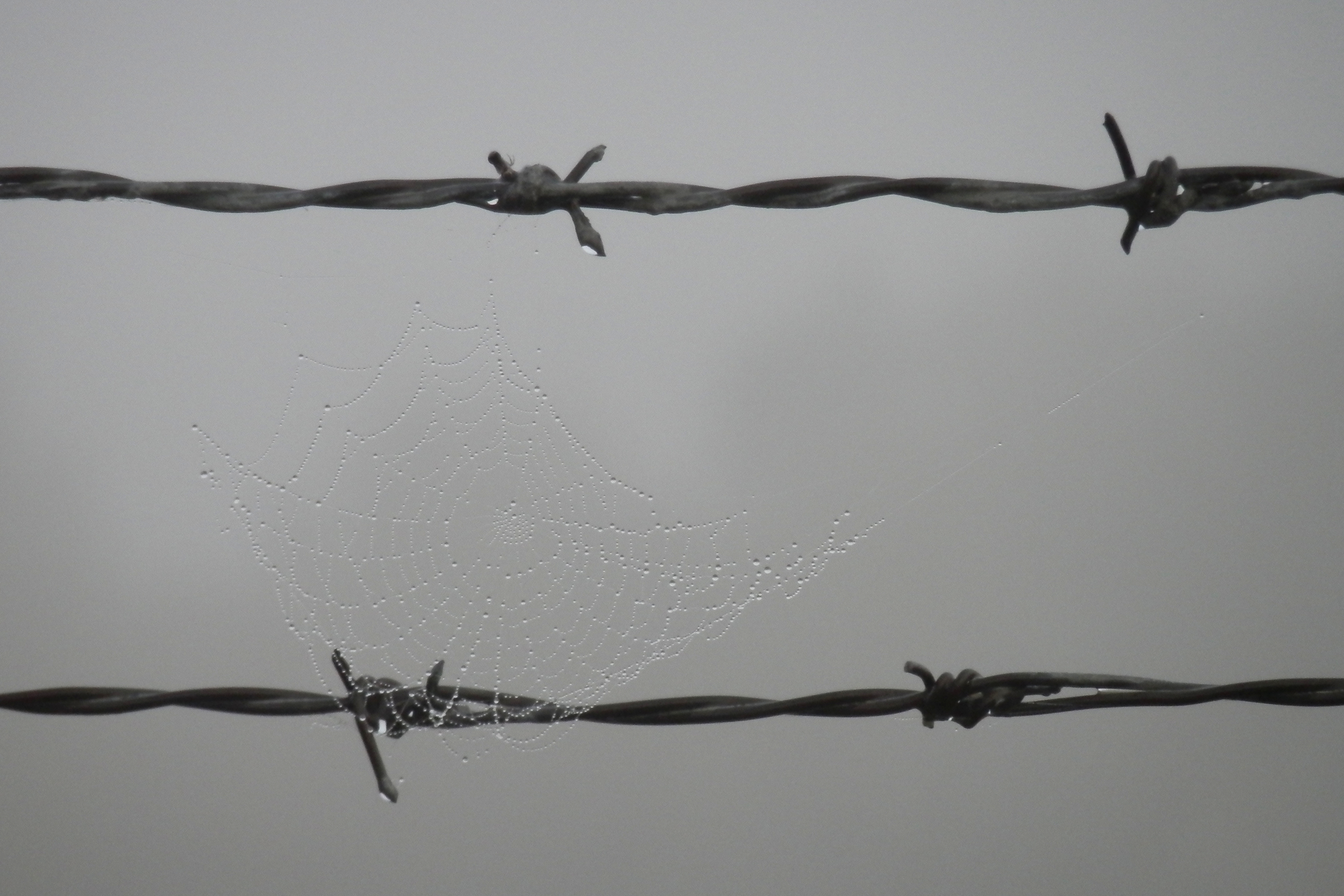 File:Spider Web on Barbed Wire - Saskatoon 01.jpg - Wikimedia Commons