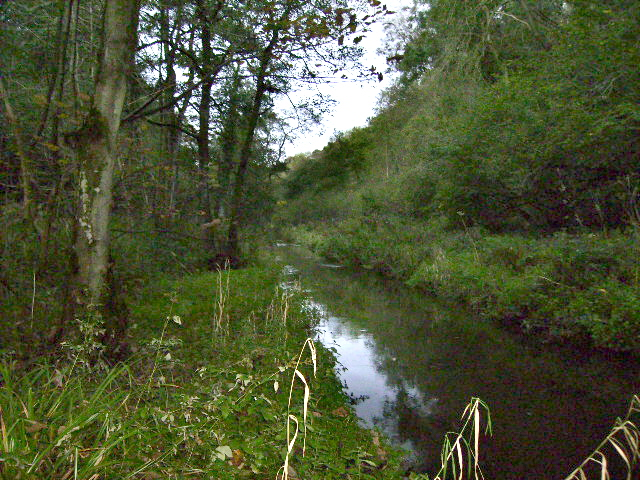 The River Derwent in Forge Valley - geograph.org.uk - 266404