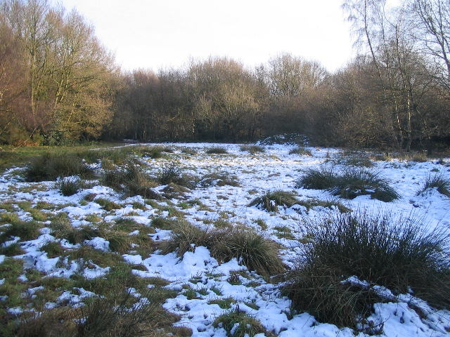 The clearing, Hearsall Common - geograph.org.uk - 1148729