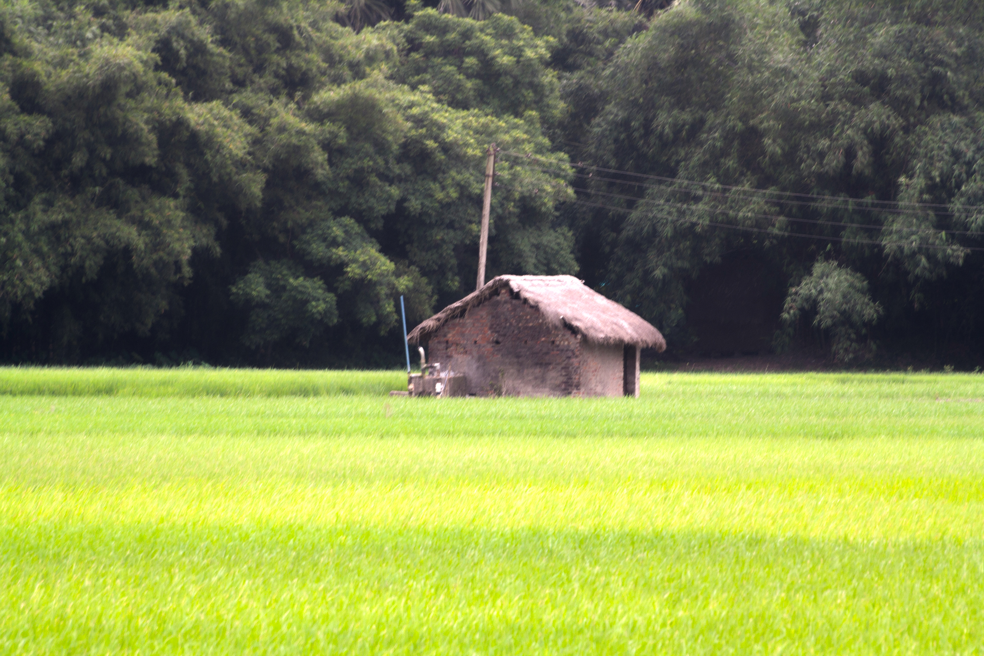 File:Village of West Bengal 13 jpg - Wikimedia Commons