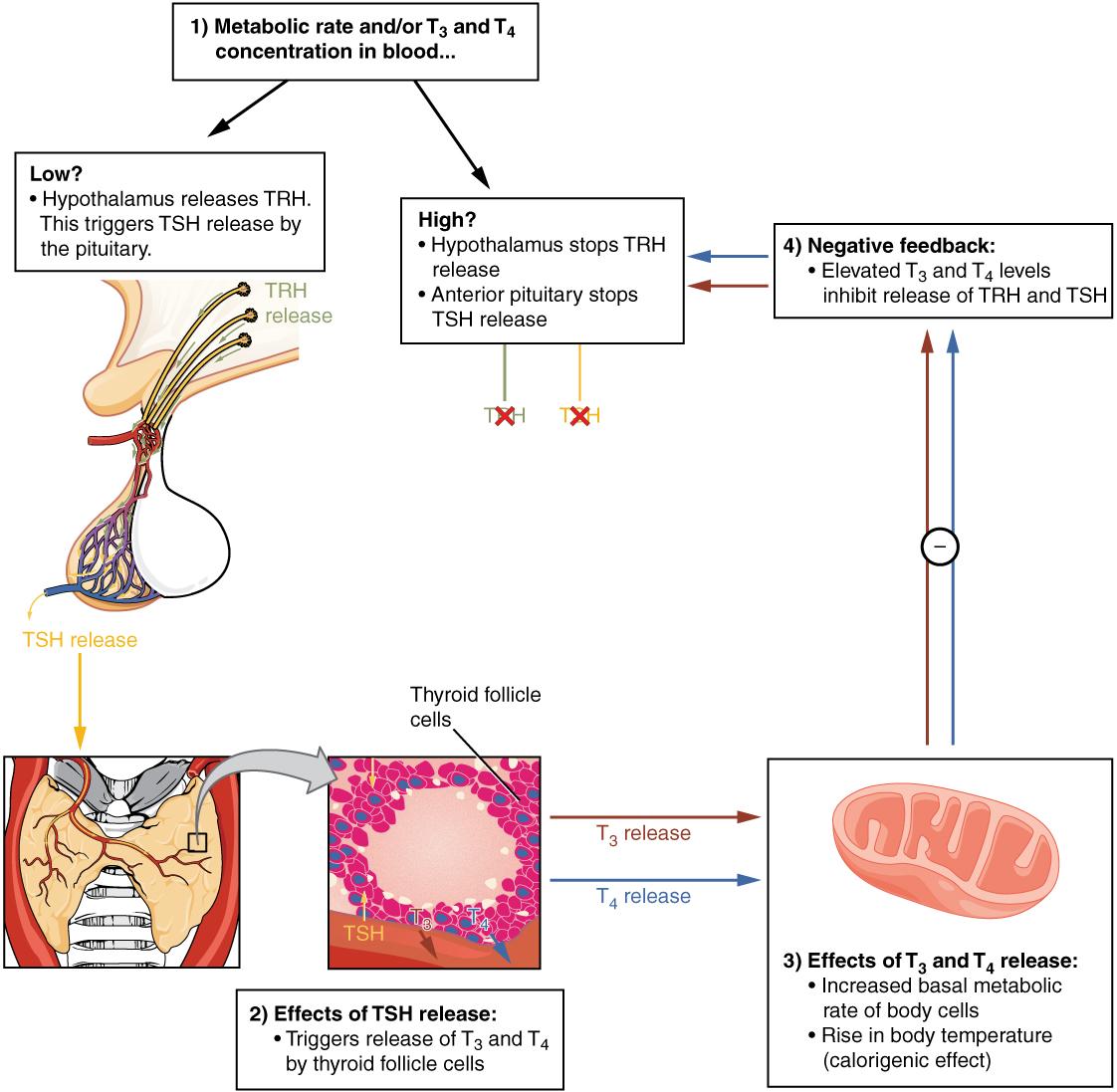 Kidney Function Wet Cat Food