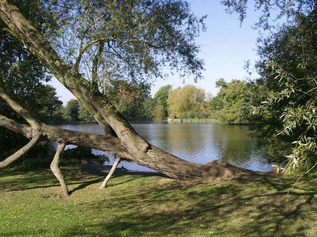 A fallen willow - South Weald - geograph.org.uk - 575427