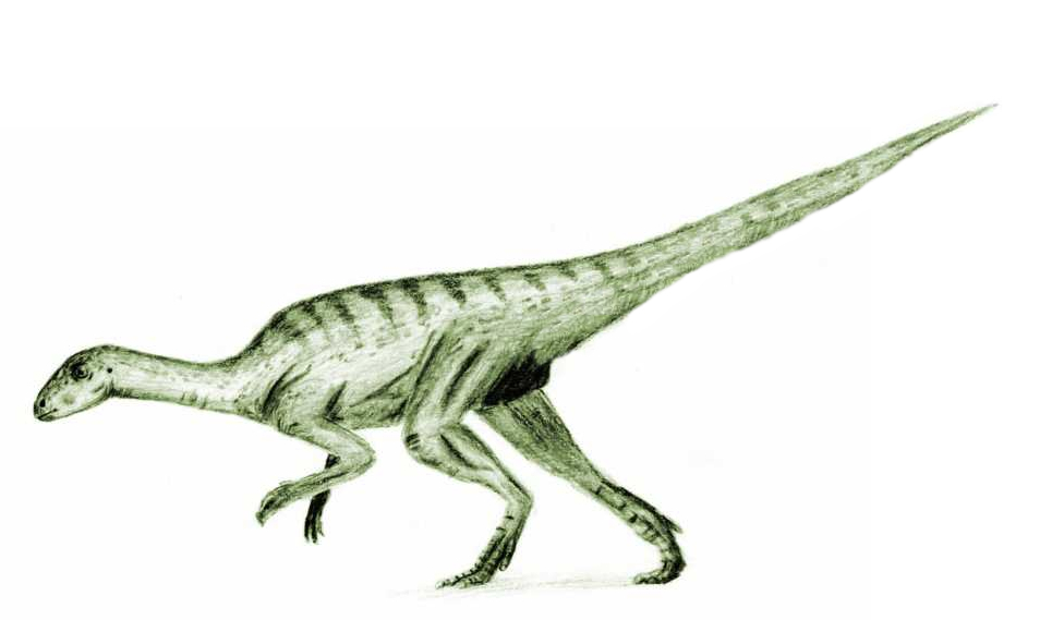 Soubor:Agilisaurus2.jpg