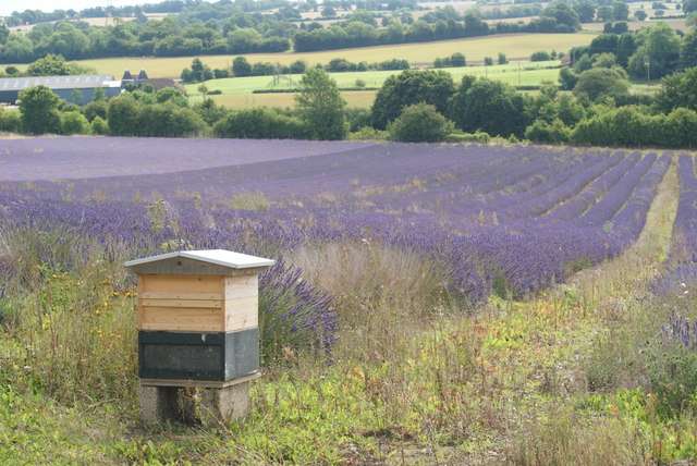 File:Beehive, Alton, Hampshire - geograph.org.uk - 1417197.jpg