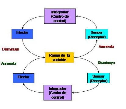Archivo:Bucle de retroalimentación negativa.jpg - Wikipedia, la ...