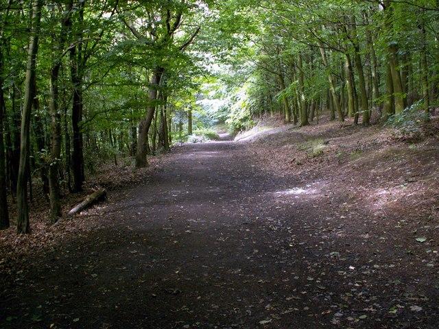 Bushcliff Wood Track - geograph.org.uk - 494130