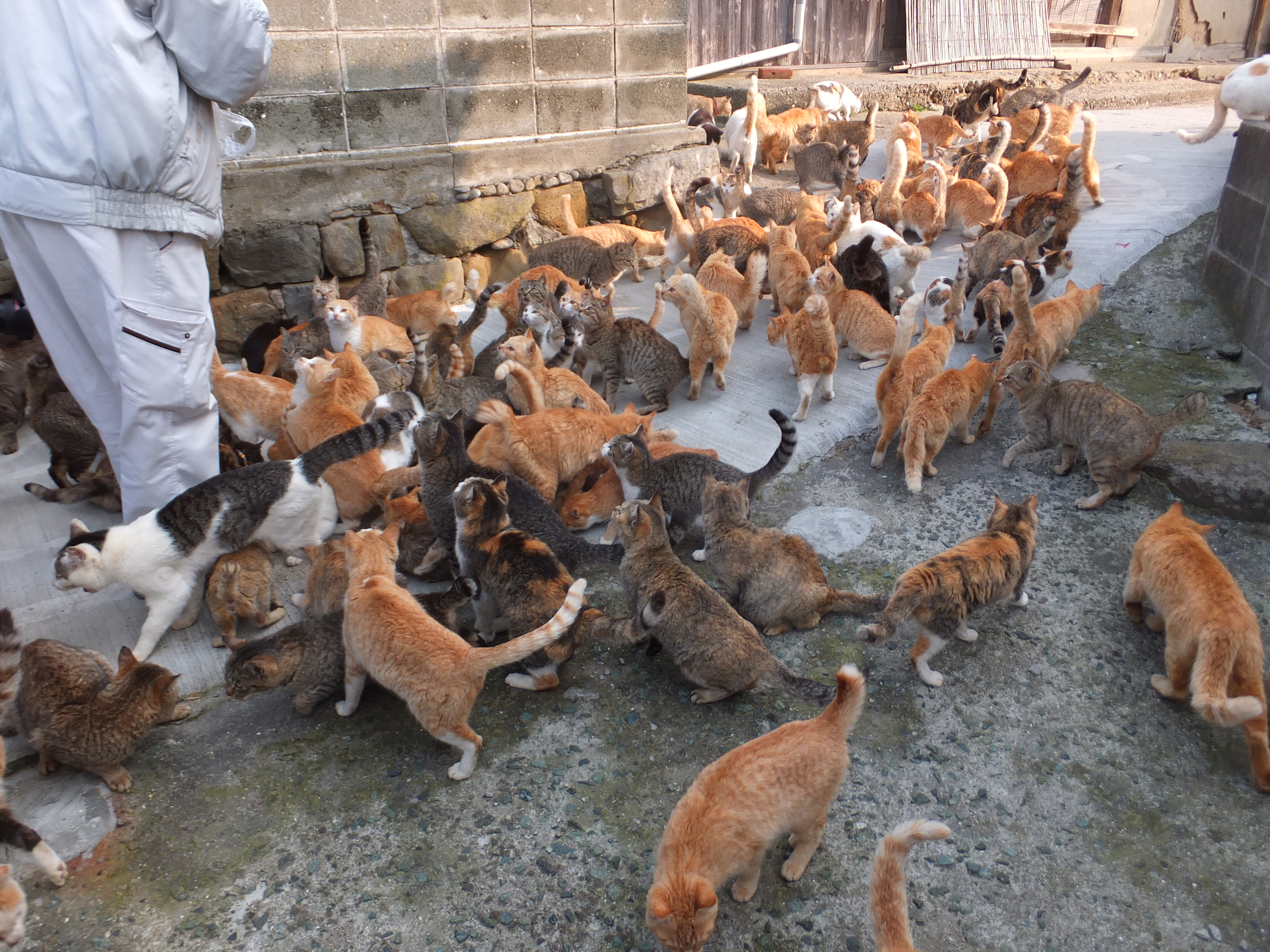 How Many Cat Breeds Originated In Mexico