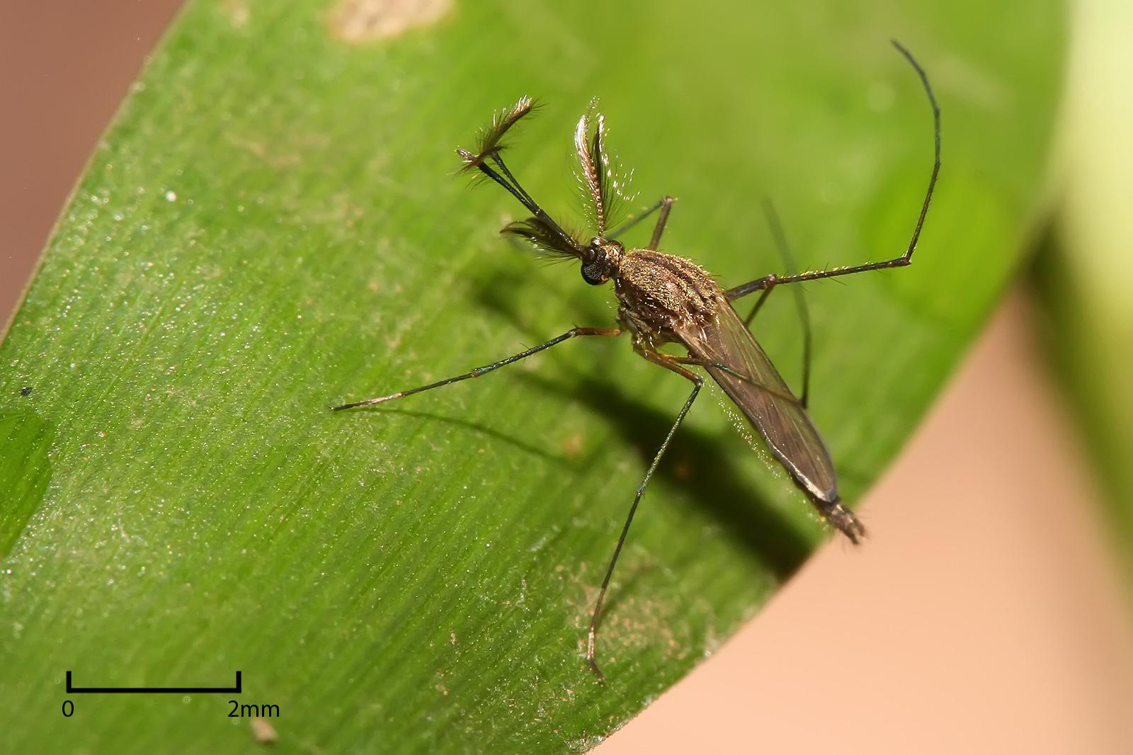 Виды комаров в картинках какие советы