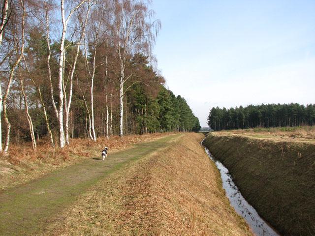 Deep ditch in Shouldham Warren - geograph.org.uk - 1739206