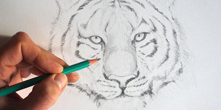 File dessiner un tigre dessin wikimedia commons - Fille facile a dessiner ...