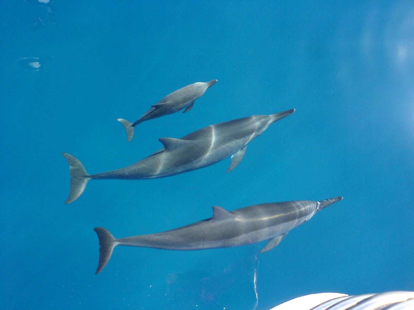 Swim With Dolphins Cocoa Beach Florida