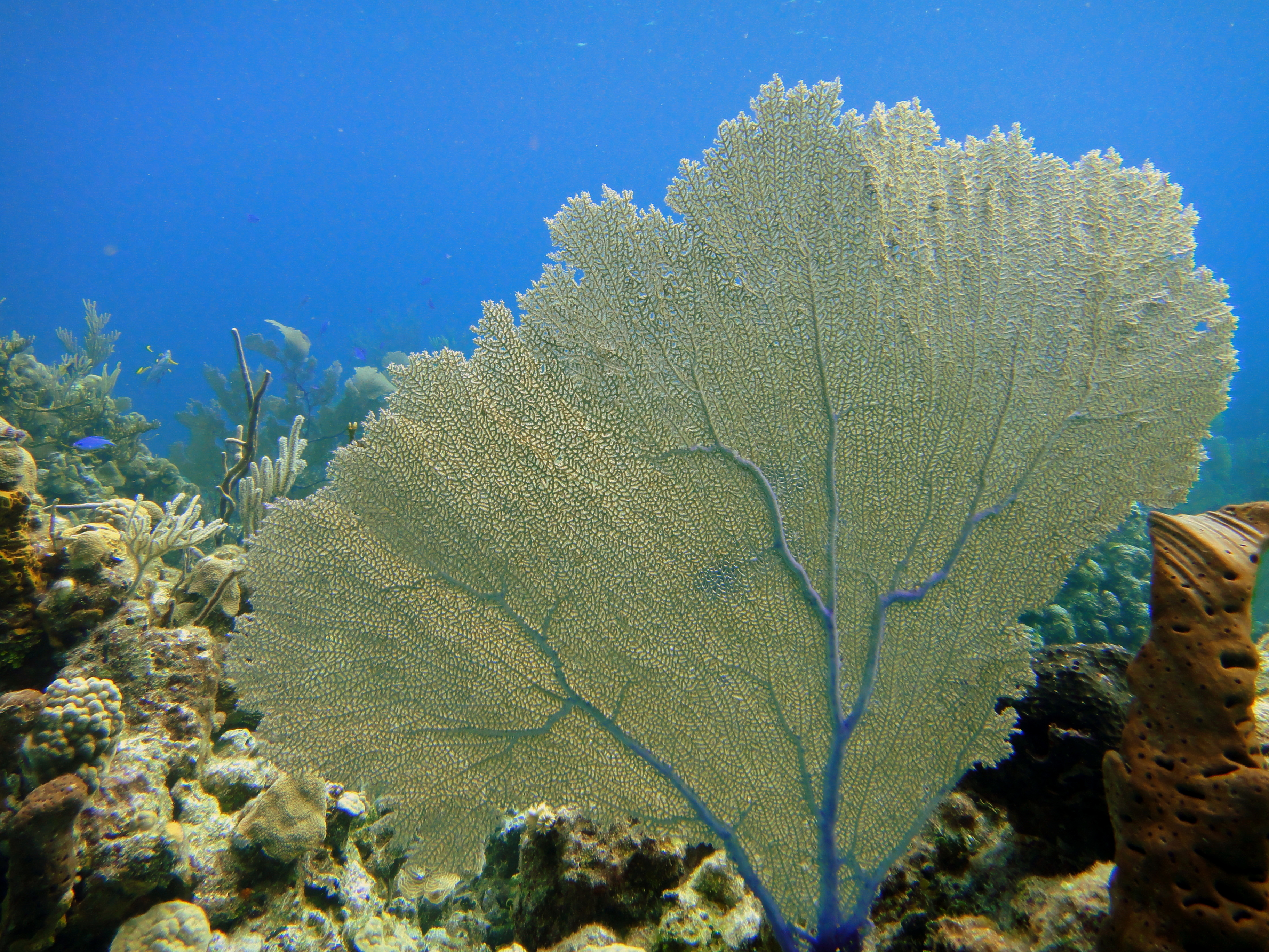 Filefan coral on lobster no lobster reef exuma cays bahamas filefan coral on lobster no lobster reef exuma cays bahamas publicscrutiny Images