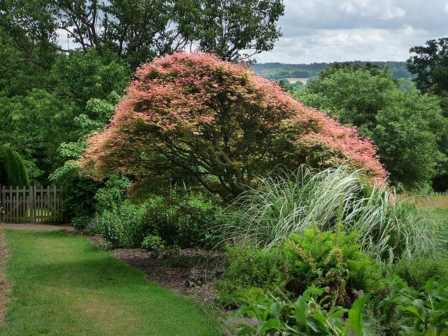 Gardens, Standen - geograph.org.uk - 1443345